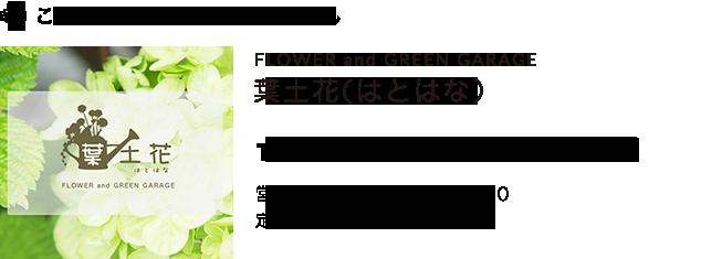 宿根草観葉植物お祝い花 葉土花(はとはな)
