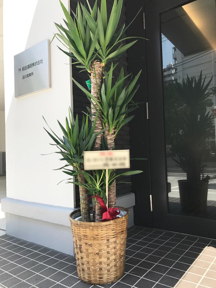 事務所移転祝い観葉植物