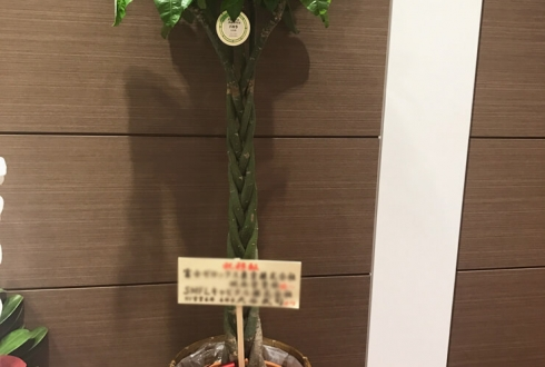移転祝い観葉植物パキラ