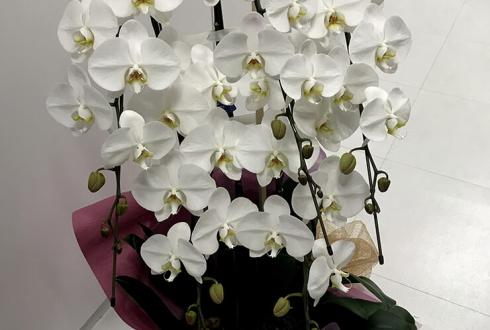 事務所設立祝い胡蝶蘭