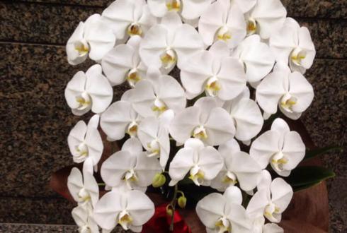 紅白出演祝い胡蝶蘭