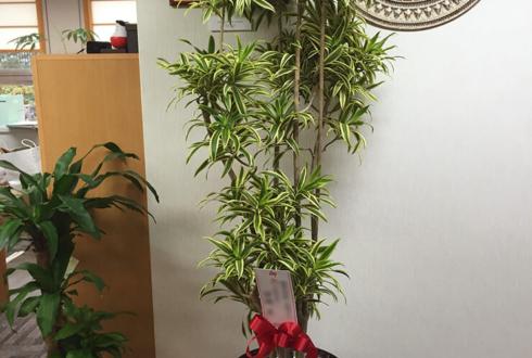 浅草 開店祝い観葉植物