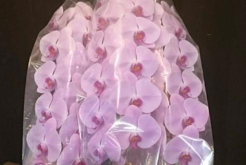 練馬区 やちよ酒場様の開店祝い胡蝶蘭ピンク