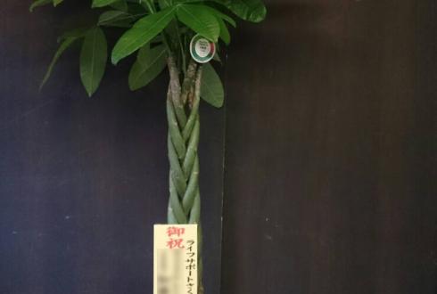 練馬区 移転祝い観葉植物パキラ