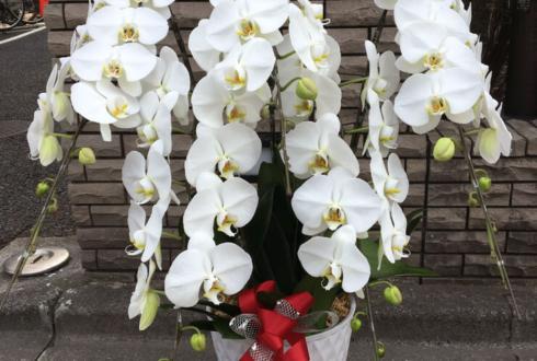 江東区深川 慧然寺様の新庫裡落慶祝い胡蝶蘭