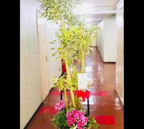 上野 株式会社ETS様の移転祝い観葉植物