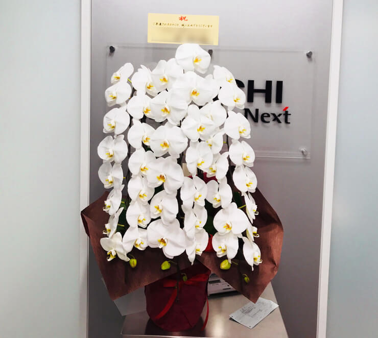 台東区東上野 日立製作所様 昇進祝い胡蝶蘭