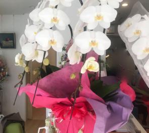 東上野 レディースクリニック様の開院祝い胡蝶蘭