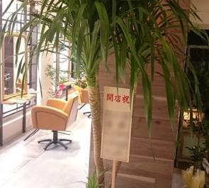 練馬 美容室 glam hair様の開店祝い観葉植物カンボジアーナ