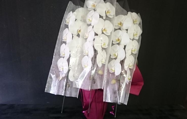 板橋区 かんだ光壽様の開店祝い胡蝶蘭