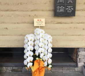 恵比寿 賛否両論様のリニューアルオープン祝い胡蝶蘭
