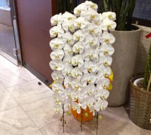 東麻布 河野設計東京様の移転祝い胡蝶蘭
