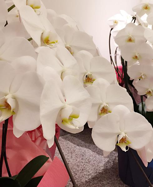 移転祝い 花