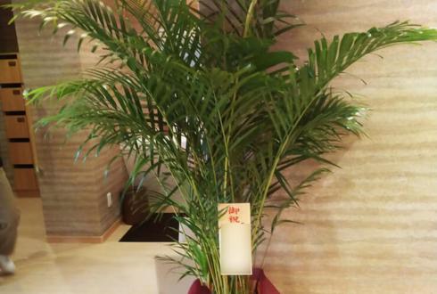 練馬区高松 グランフォレスト練馬高松様の開設祝い観葉植物