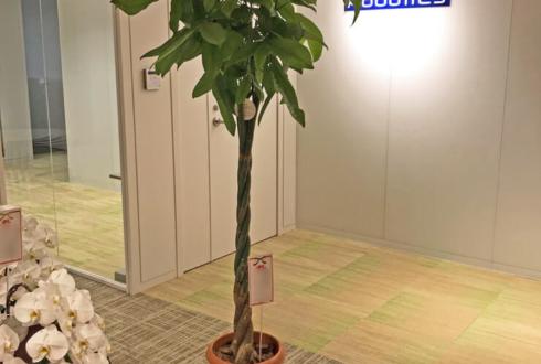 台東区松が谷 カワダロボテックス株式会社様の移転祝い観葉植物