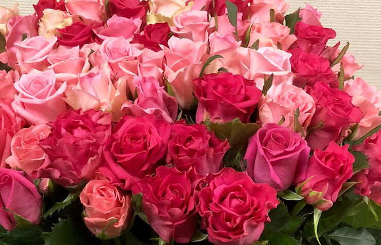 笠間市 誕生日プレゼントにピンク濃淡バラ花束50本
