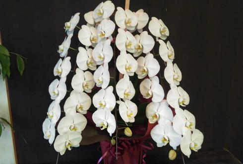 練馬 とうやま歯科様の開院祝い胡蝶蘭