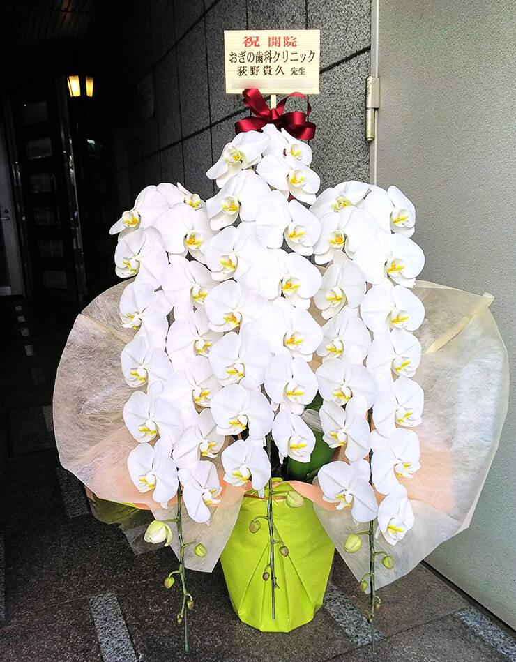 深谷市 荻野歯科クリニック様の開院祝い胡蝶蘭