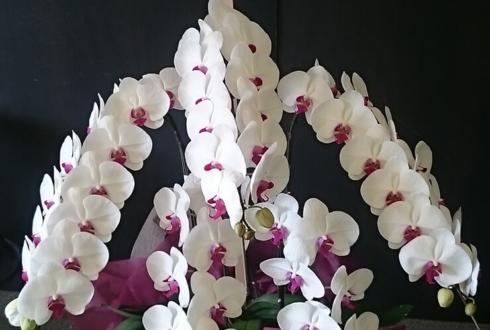 練馬 法人設立祝い胡蝶蘭