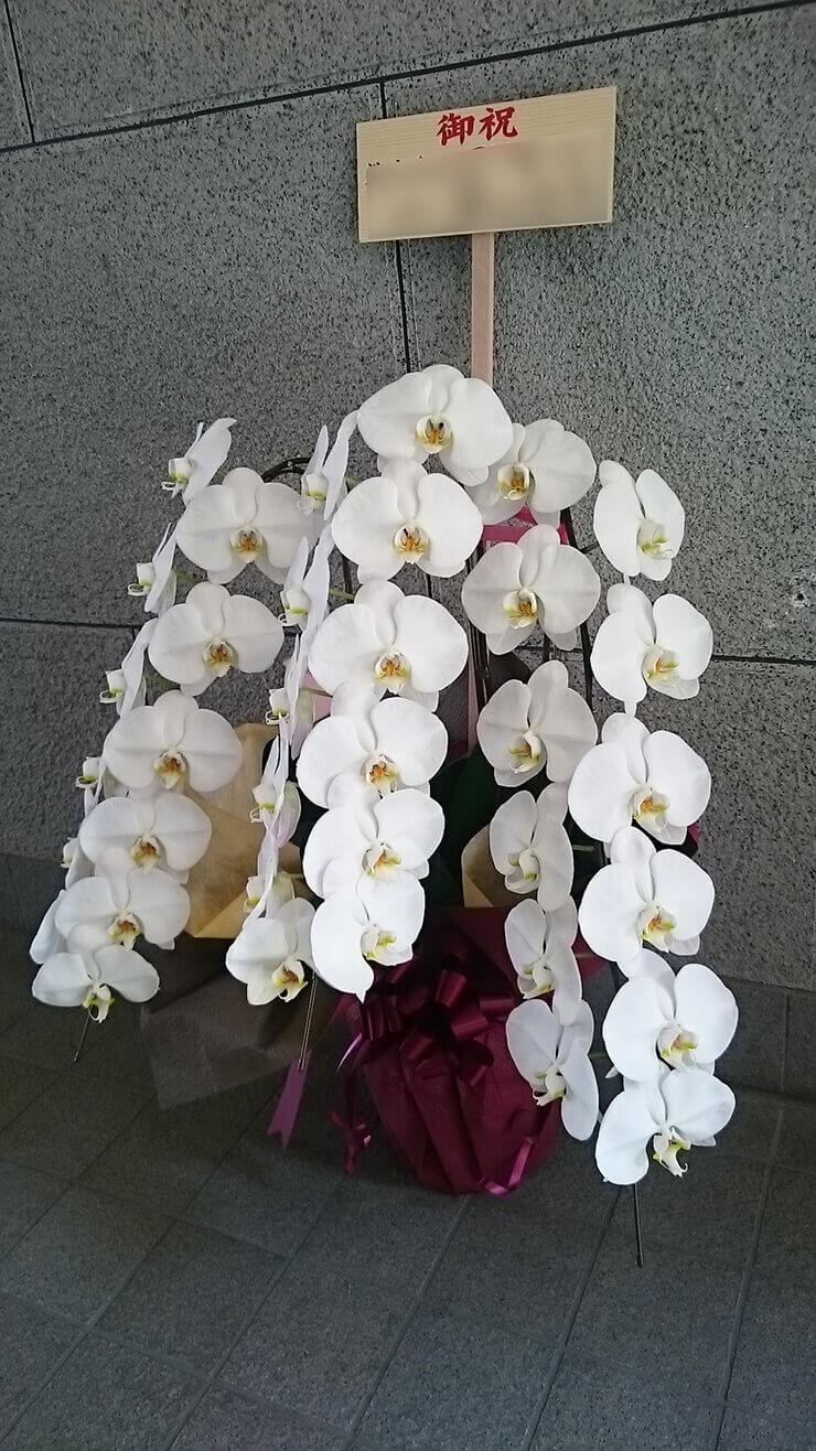 銀座 美ら菜苑様の開店祝い胡蝶蘭