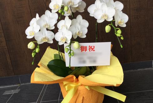 新橋 とり安様の開店祝いミディ胡蝶蘭