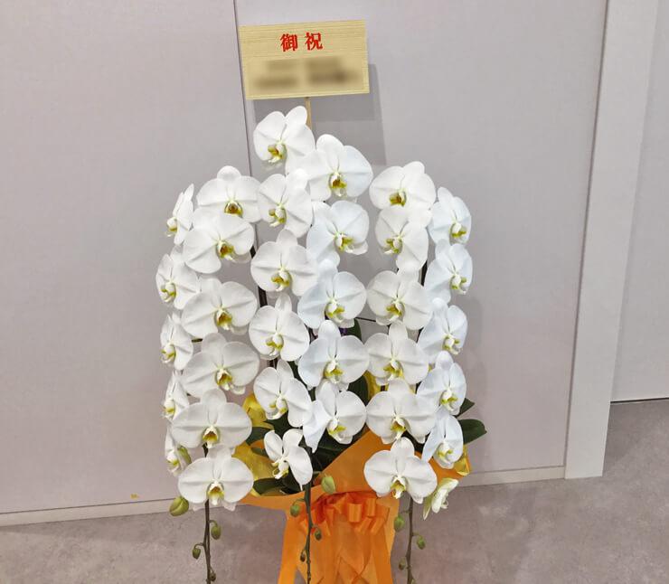 神宮前 株式会社TATERU様の移転祝い胡蝶蘭