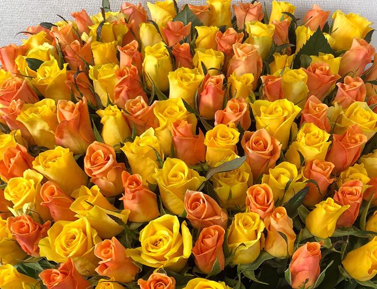 宮崎市 65歳の誕生日プレゼントに黄色オレンジMixバラの花束65本