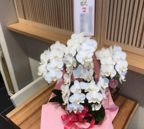 浅草 たいざん桜様の開店祝い胡蝶蘭