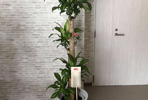 市川市 東洋合成工業株式会社様の昇進祝い観葉植物 幸福の木