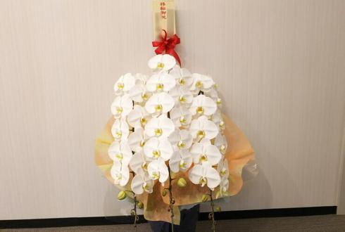 港区芝浦 株式会社阪急阪神ビジネストラベル様の移転祝い胡蝶蘭