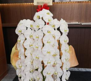 新宿 The GLOBAL HOTEL TOKYO様のOPEN祝い胡蝶蘭