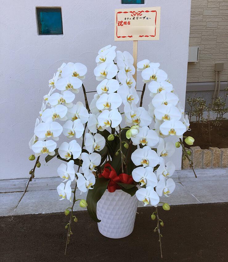 足立区 カフェ オリーブ様の開店祝い胡蝶蘭