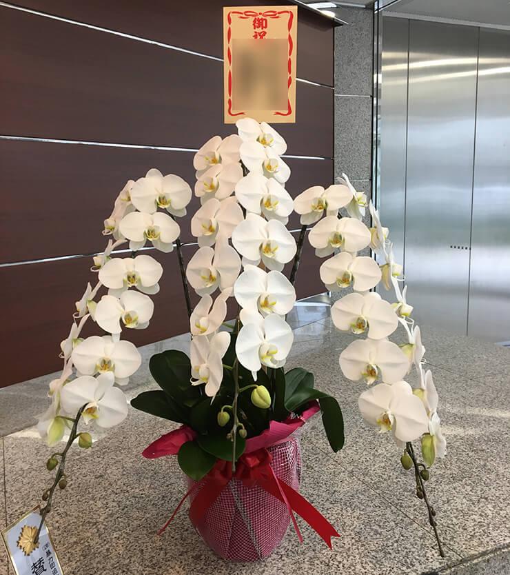 港区 高松建設様の代表取締役社長就任祝い胡蝶蘭