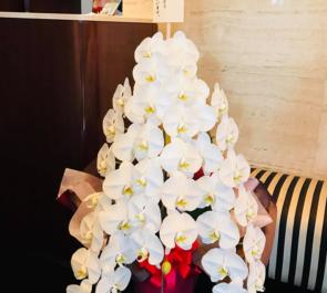 西麻布 サロンドグー(Salon du Goût)様の10周年祝い胡蝶蘭