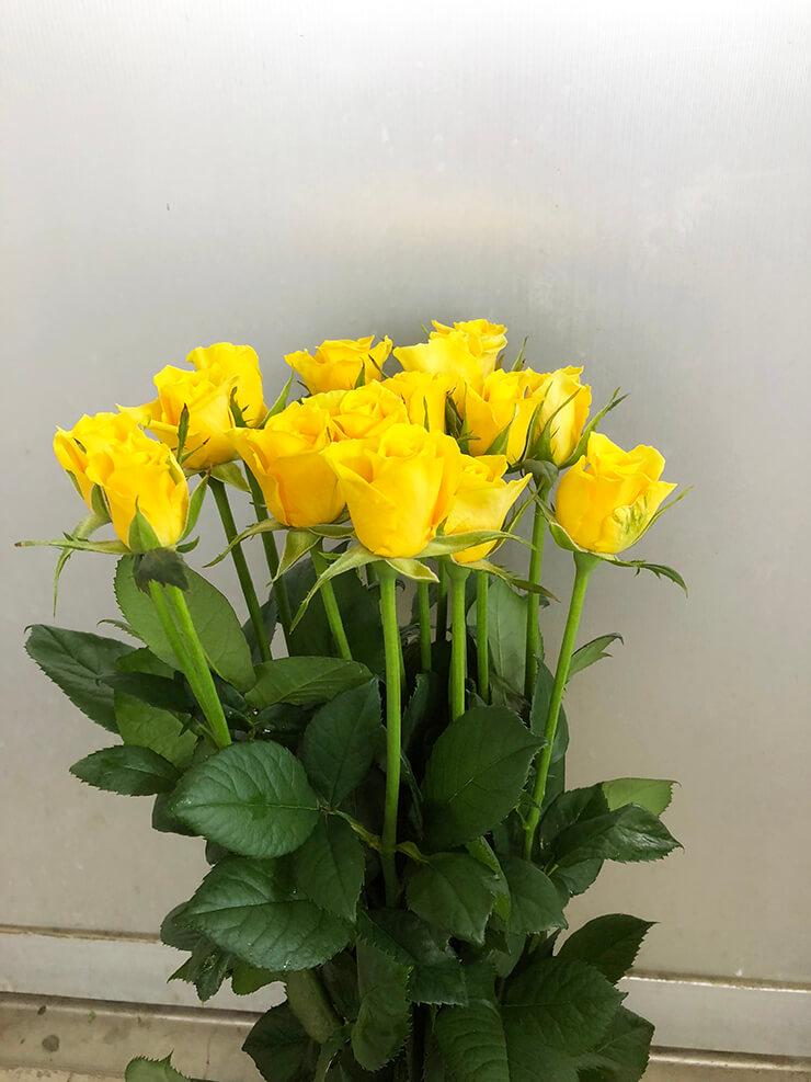 水戸市 母の日に黄バラ花束15本