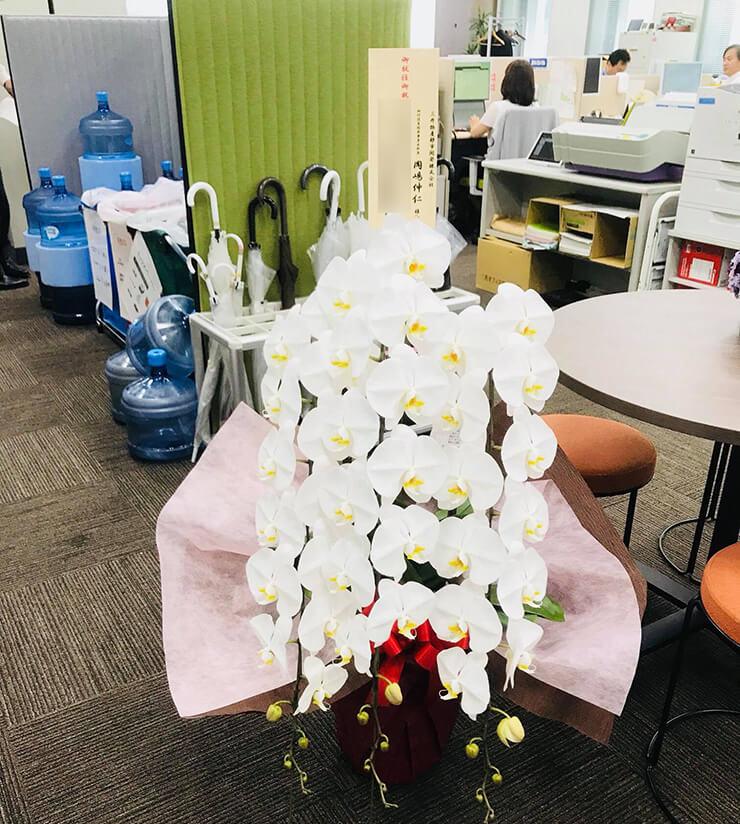 千代田神田紺屋町 ドローンデパート株式会社様の移転祝い胡蝶蘭