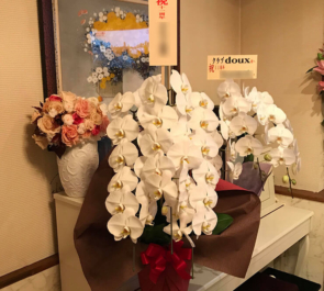 銀座 club doux様の11周年祝い胡蝶蘭