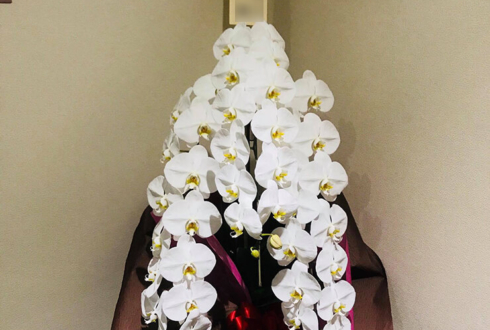 上野 株式会社ケ-アイ オフィス サプライ様の移転祝い胡蝶蘭
