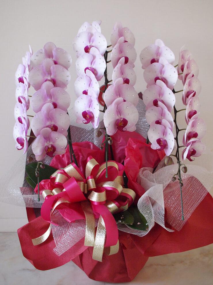 銀座 誕生日祝い胡蝶蘭