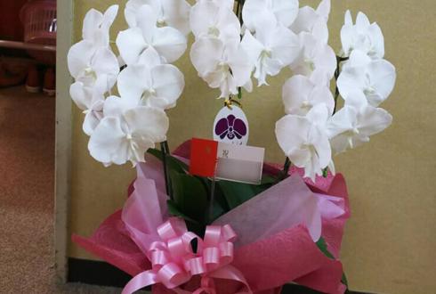 明治座 横関咲栄様の舞台楽屋花 胡蝶蘭