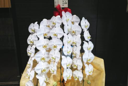 新宿ワシントンホテル 有限会社ミキたんまい工房様の設立20周年祝い胡蝶蘭