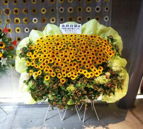 マイナビBLITZ赤坂 Cheeky Parade 永井日菜様の解散ライブ3基連結ヒマワリスタンド花