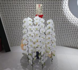 東京ミッドタウン日比谷 旭化成株式会社様の移転祝い胡蝶蘭
