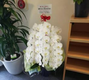 赤坂 税理士法人Miznale様の開業祝い胡蝶蘭