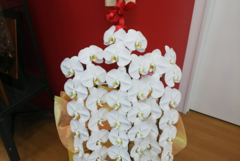 西新宿 株式会社gumi様のお祝い胡蝶蘭