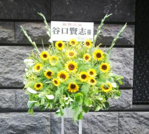 シアターサンモール 谷口賢志様の舞台出演祝いひまわりスタンド花
