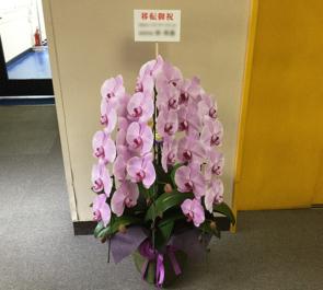 赤坂 有限会社エル・デイ・エル様の移転祝い胡蝶蘭