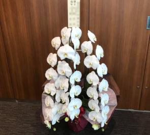 千代田区 加賀電子株式会社様の創立50周年祝い胡蝶蘭