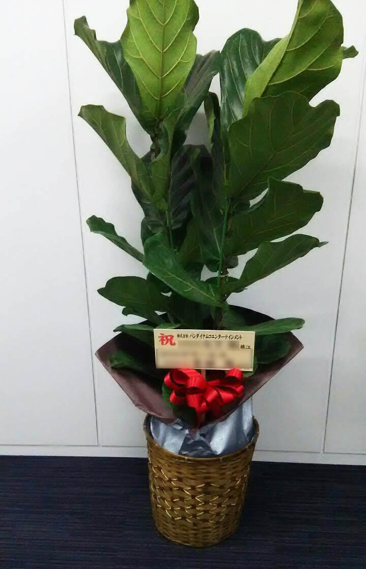 港区芝 バンダイナムコエンターテインメント様のお祝い観葉植物