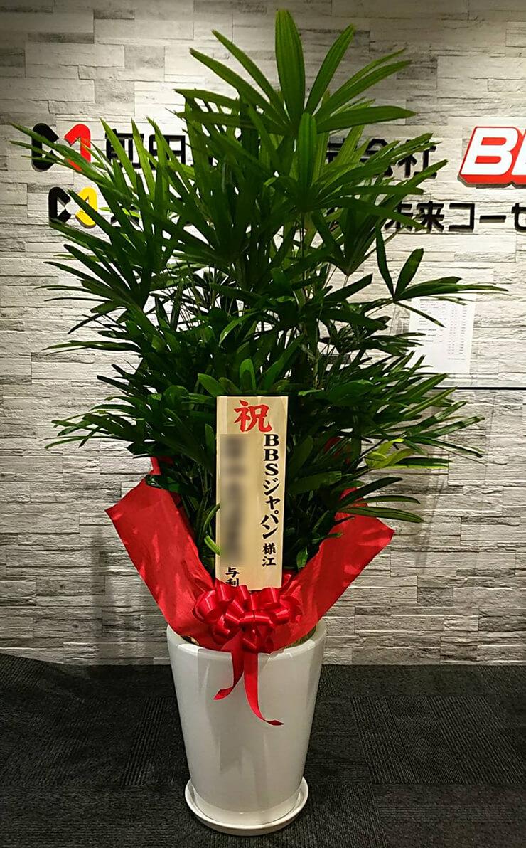 港区芝公園 BBSジャパン株式会社様の移転祝い観葉植物